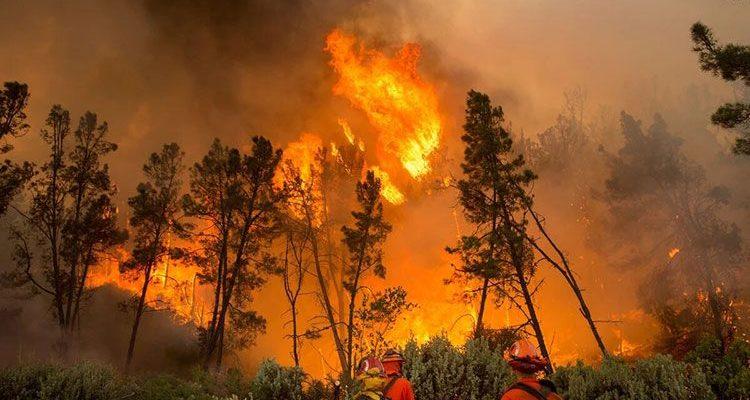 Чем опасны верховые пожары