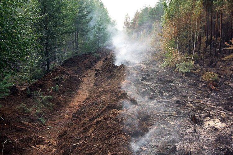 Полоса минерализованная от низовых пожаров